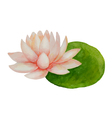 Watercolor pink Lotus flower vector image