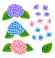 blue pink and purple hygrangea flower isolated on vector image vector image