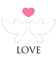 Pair pigeon love vector image