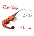 hand drawn engraved ink shrimp or prawn isolated vector image vector image