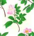 Seamless texture twig wild roses vector image vector image