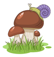 cartoon mushrooms vector image vector image