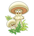 champignons or white mushrooms vector image vector image