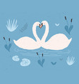 couple white swans floating together in water vector image vector image