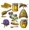 honey set jars of bee hive clover