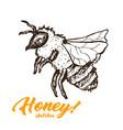 honey sketch bee honey hand drawn superfood vector image