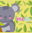 koala wildlife animal cartoon vector image