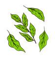matcha green tea leaves or plant organic japanese vector image vector image