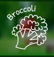 thin line broccoli icon vector image vector image