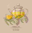 cup of yarrow tea and teapot vector image vector image