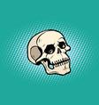 human skull head skeleton vector image