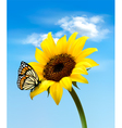 sunflower with butterfly vector image vector image