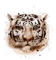 tiger watercolor wildlife animal front vector image
