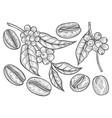 coffee branch vector image vector image