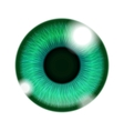 Human Green Eye vector image