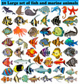 50 big set fish and sea animals isolated on vector image
