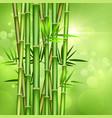 bamboo4 vector image vector image