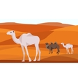 Camel in the desert sand hills dunes animals vector image vector image