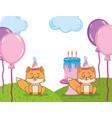 happy birthday foxes vector image