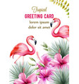 tropical greeting card with pink hibiscus and vector image vector image