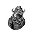 buffalo bull character in coat fashionable vector image