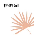 isolated doodle with tropical vector image vector image