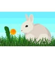 Rabbit on the grass flower seamless animal and vector image vector image