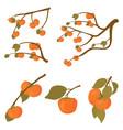 set persimmon fruit tree branches kaki vector image vector image