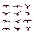 bird flying silhouette set wildlife icon vector image vector image
