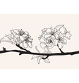 decorative cherry blossom vector image vector image