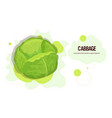 fresh green cabbage sticker tasty vegetable icon vector image