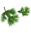 set fir branches vector image