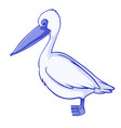 blue pelican on white background vector image vector image
