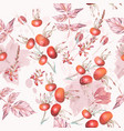 botanical pattern with wild rose berries vector image