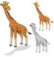 Giraffe Cartoon Character vector image
