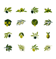 Olive branch Set of logos and icons vector image