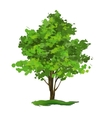 Tree hand drawn painted vector image vector image