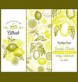 vintage citrus banner template set lemon tree vector image vector image