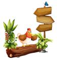 A chicken near the arrow board vector image vector image