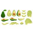cartoon avocado ripe avocados fruits healthy vector image vector image