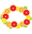 frame citrus fruits slice vector image