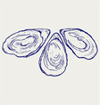 Fresh opened oyster vector image vector image