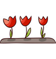 opened tulips isolated vector image vector image
