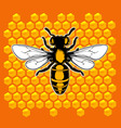 realistic bee vector image vector image