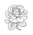 black and white rose flower with leaves and stem vector image vector image