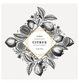 citrus fruits greeting card or invitation design vector image