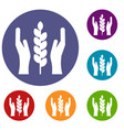 hands and ear of wheat icons set vector image vector image