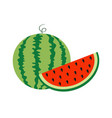watermelon whole ripe green stem slice cut half vector image vector image