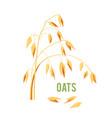 oats cereals grain vector image