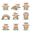 set of little cute hamster doing relaxing exercise vector image vector image